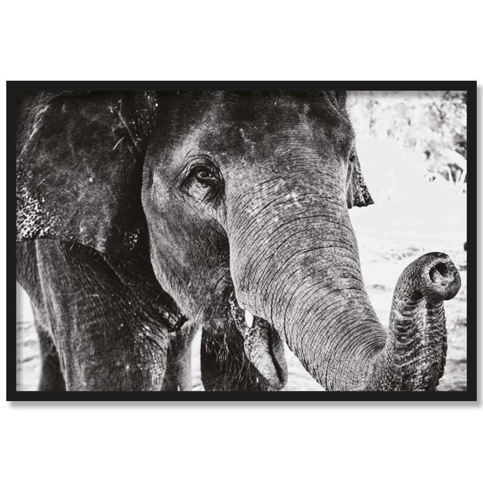 Poster Elefant Elsa, mit Rahmen
