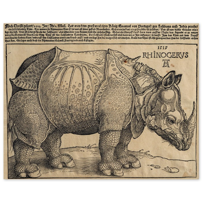 Poster Nashorn Albrecht Dürer Rhinocerus