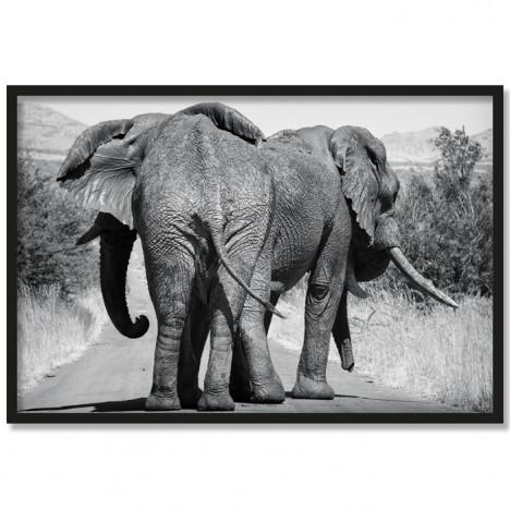 Poster Elefantenfamilie
