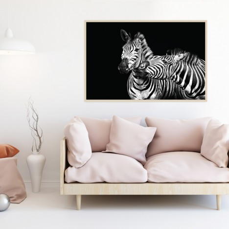 Poster Zebra Couple