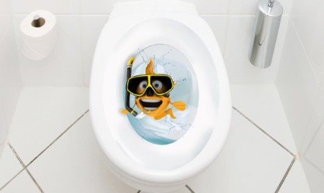 WC Aufkleber Goldfisch Taucherbrille