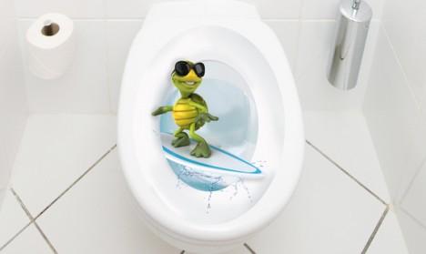 WC Aufkleber Schildkröte Surfer