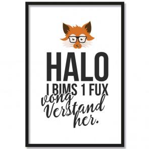 halo i bims 1 fux poster