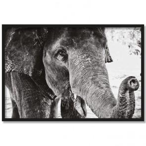 Poster Elefant Elsa