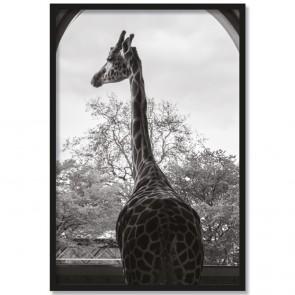 Poster Giraffe Vanessa