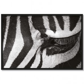 Poster Zebra Eye