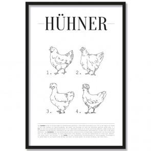 Poster Hühner Arten