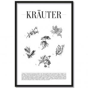 Poster Kräuter