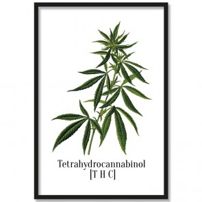 Poster Tetrahydrocannabinol [THC]