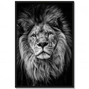 Poster Löwe Schwarz Weiß