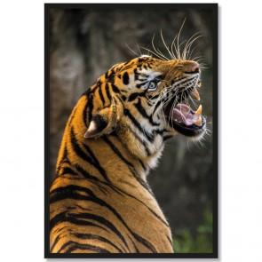 Poster Tiger Fotomotiv