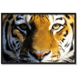 Poster Tiger Rahmen