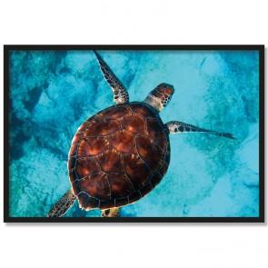 Poster Schildkröte im Meer Rahmen
