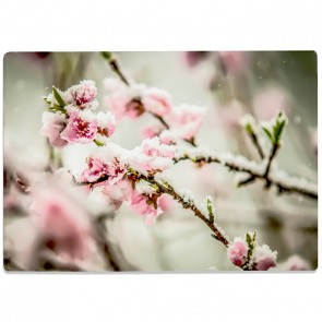 Glasschneidebrett Kirschblüten im Schnee