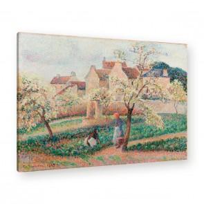 blühende Pflaumenbäume von Camille Pissarro als Leinwandbild