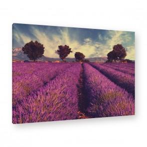 Leinwandbild - Sonnenuntergang - Lila - Violett