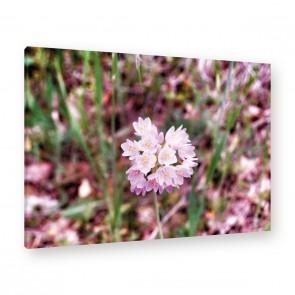 Leinwandbild - Just some Flowers - Wiese - Garten