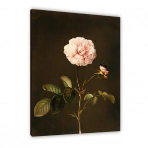 Essig-Rose mit Hummel auf Leinwand