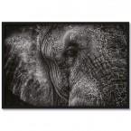 Poster Elefant Herbert