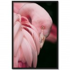 Poster Flamingo Roxi, mit Rahmen