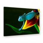 Leinwandbild - Eidechse - Regenwald - Chameleon - Colorful