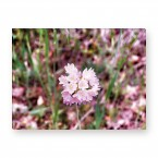 Leinwandbild - Blume -