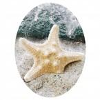 WC Aufkleber Starfish